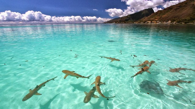 island surrounded by sharks