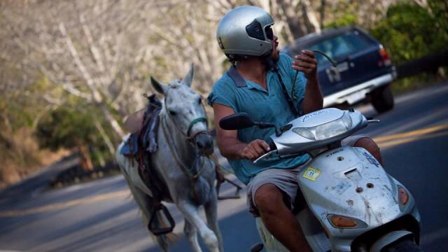 scott alexander horse and scooter
