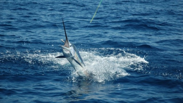 world fishing championships costa rica