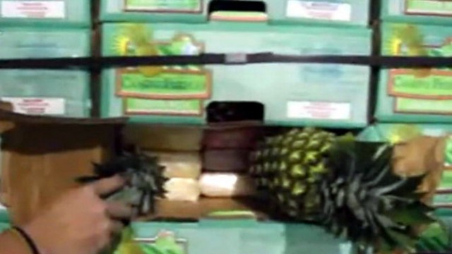 costa rica drug trafficking pineapples