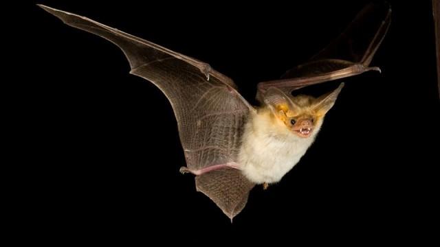 bat jungle costa rica