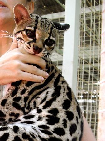 jaguar-rescue-center 1