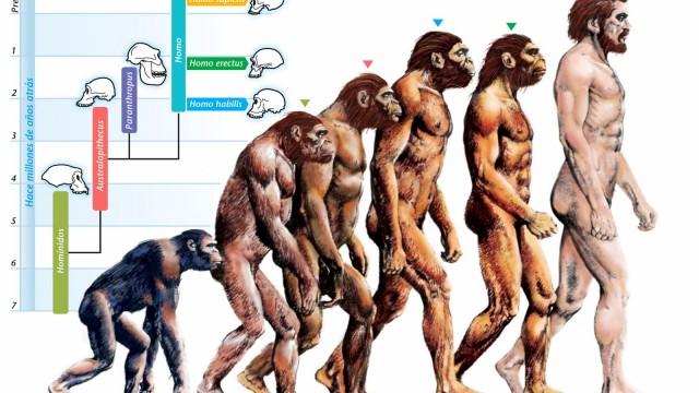 dna evolution 1
