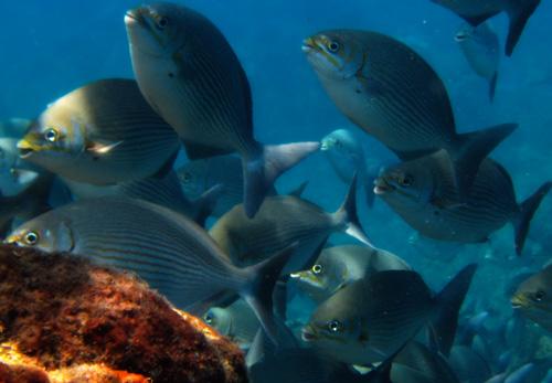 ocean-conservation-costa-rica