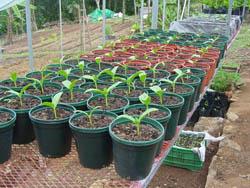 organic farming in costa rica 1