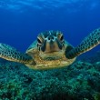 sea-turtle-sanjay-costa-rica