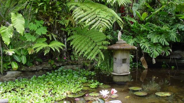 Lankester Botanical Gardens costa rica