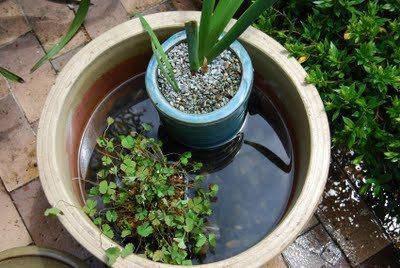dengue breeding places