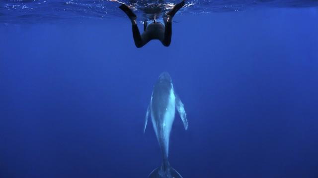 costa rica whale watching main