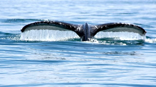 whale-watching costa rica