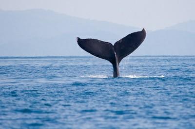 whale-watching costa rica main