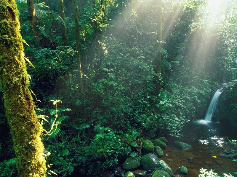 Biologica Bosque Nuboso Monteverde