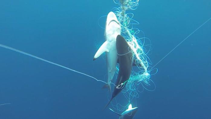 cocos island illegal fishing 1