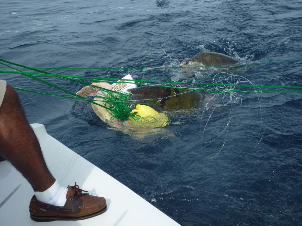 costa rica fishing indutry regulations