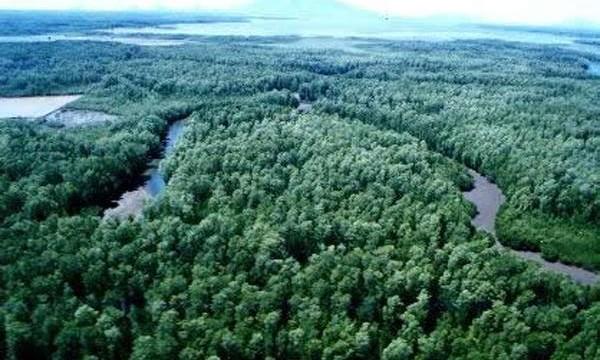 costa rica reforestation