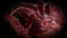 ebola virus main
