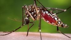 chikungunya costa rica main