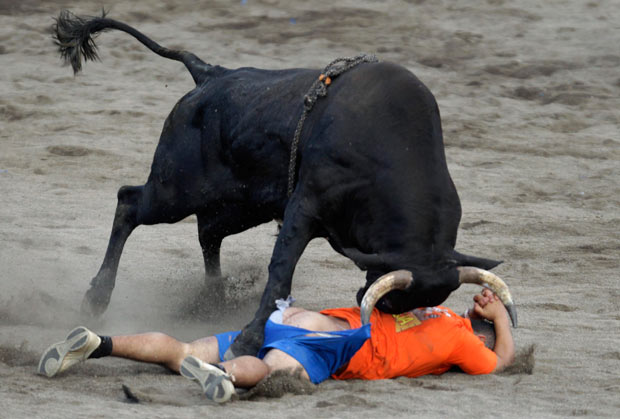 costa rica bullfights main