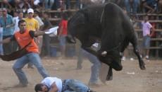 costa rica bullfights