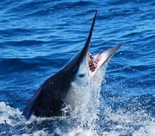 costa rica sportfishing jaco los suenos 1
