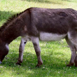 dead donkeys dumped new jersey
