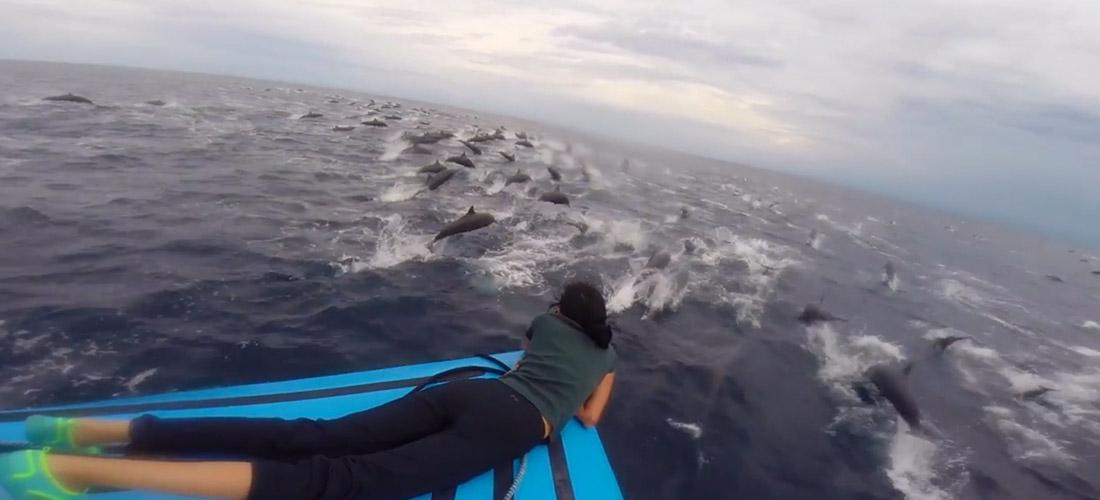 dophin Pod Costa Rica