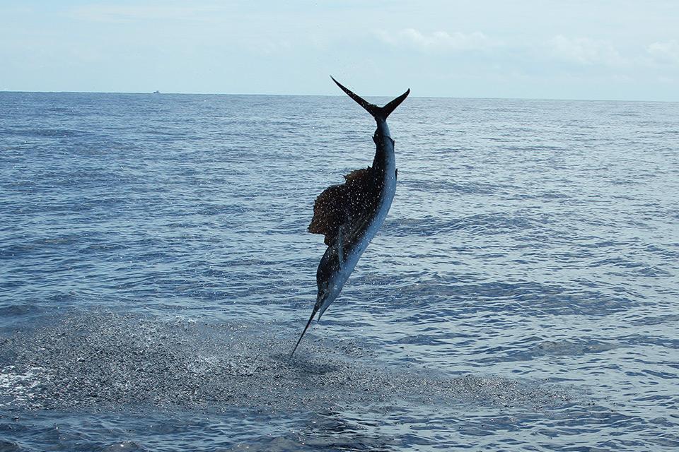los-suenos-sport-fishing 1