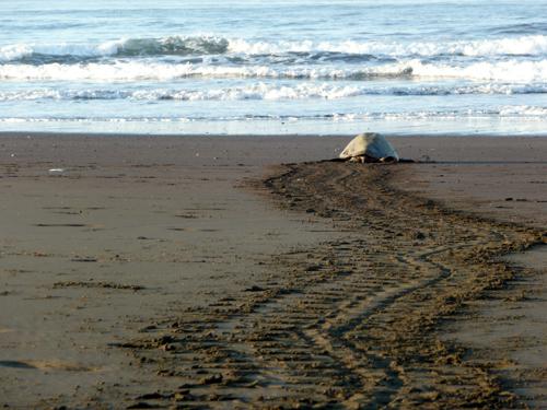 playa tortuga costa rica 1