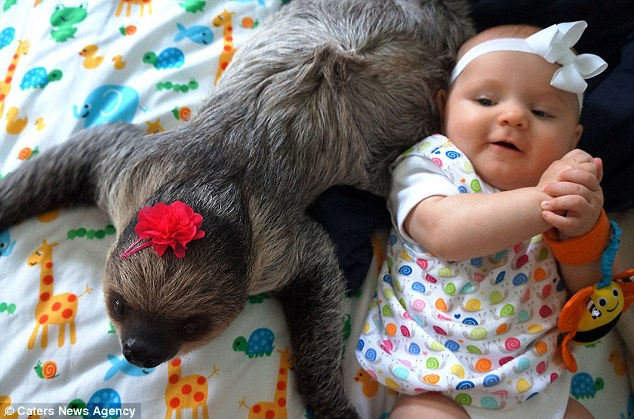 sloth daisy and baby video