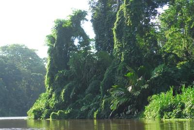 Costa-Rica-Conservation 1