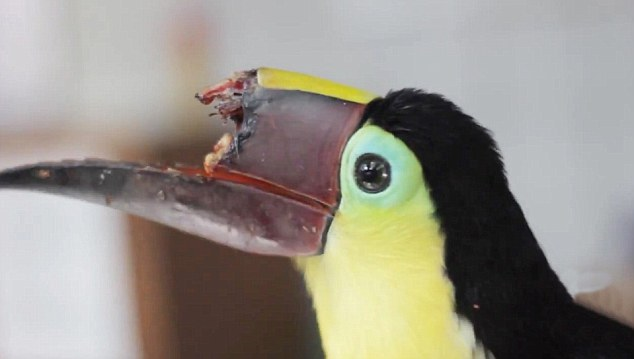 VID: Thugs Bash off Beak of Toucan