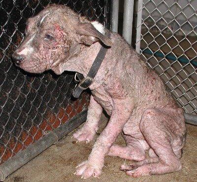 animal abuse laws costa rica