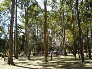 sabana park trees costa rica