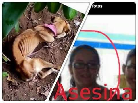 starved dog costa rica animal abuse 1