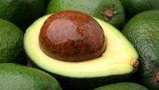 avocado costa rica main