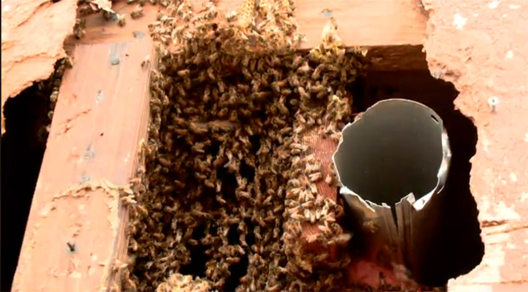bee hive oklahoma