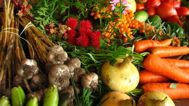 organic food costa rica main