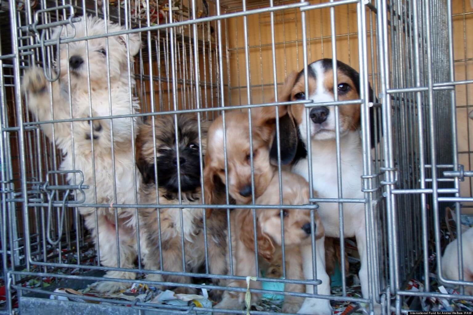 puppy mills costa rica