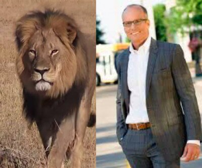 Walter-James-Palmer-DDS-cecil-lion
