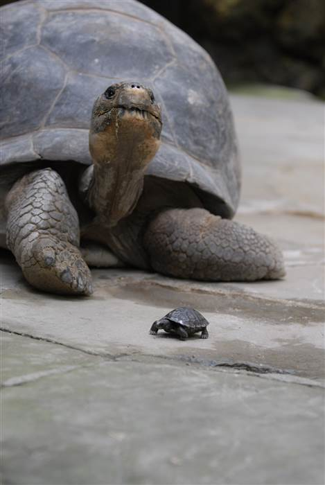 80 year old turtle has babies 1
