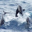 Bottlenose dolphins costa rica
