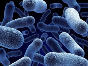 Clostridium difficile costa rica 1