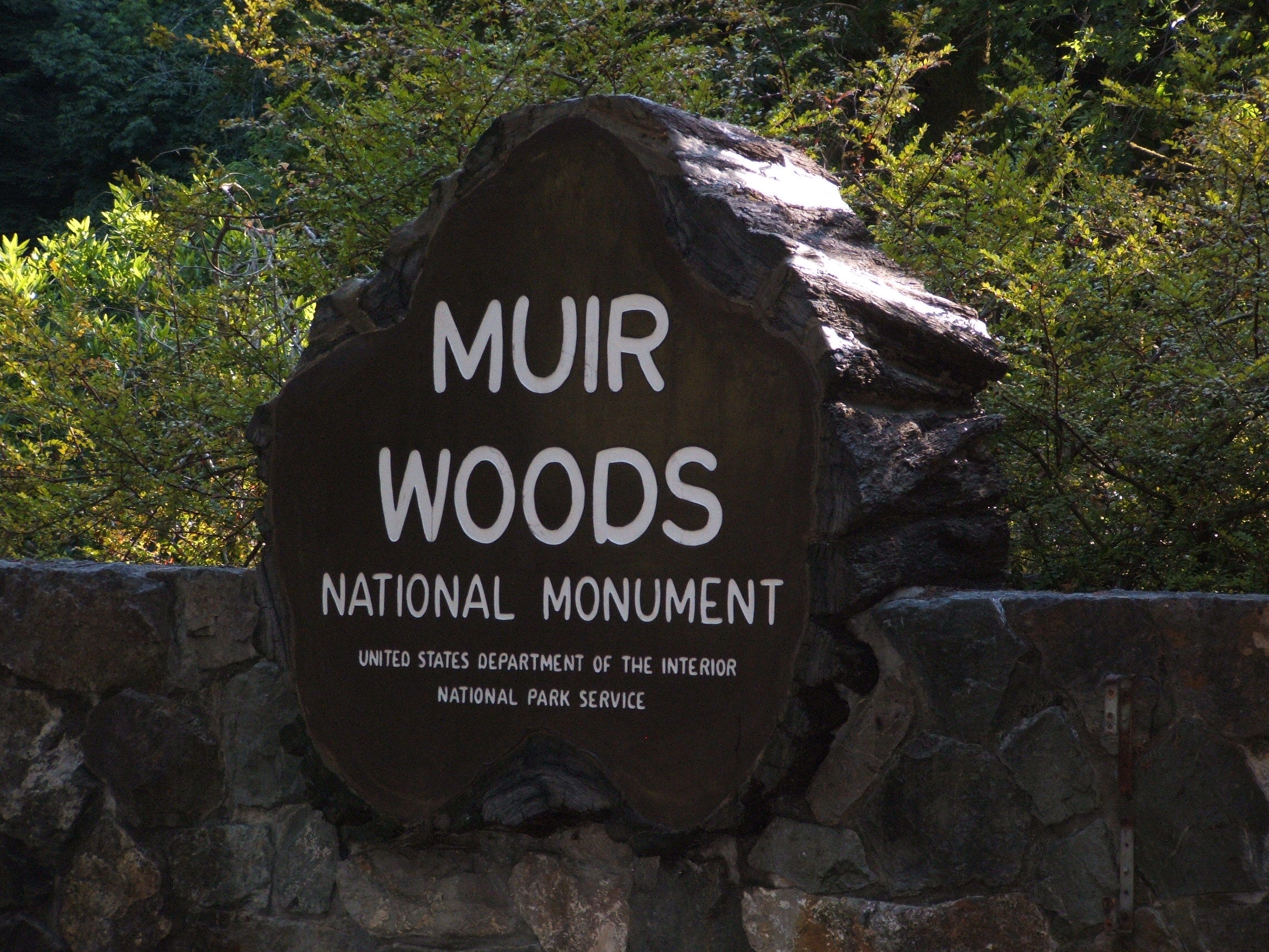Muir_Woods_National_Monument 1