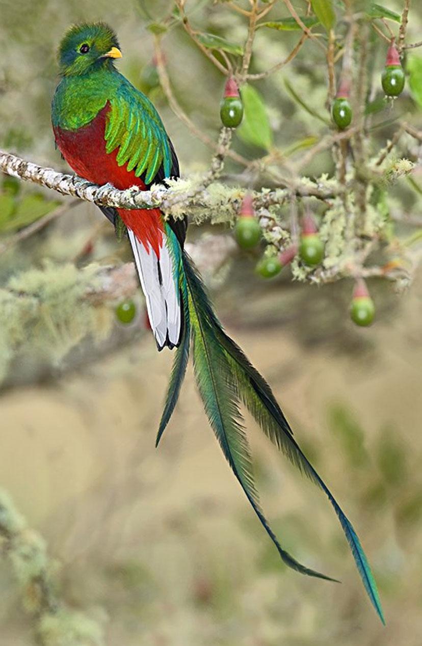 quetzals-costa-rica