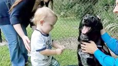 abusive baby sitter exposed by dog main