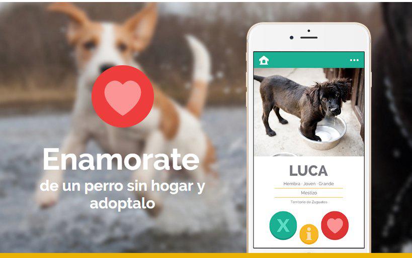adopt a dog costa rica