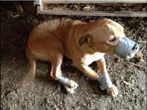 animal abuse costa rica