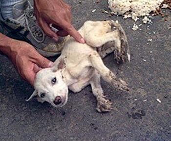 animal welfare costa rica 1
