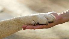 animal welfare costa rica