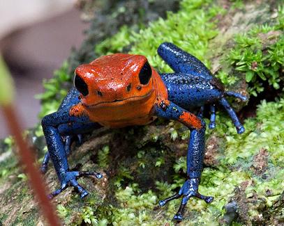 biodiversity costa rica 1